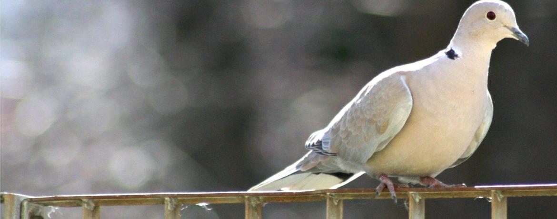 uccello pace cec settimana della pace giornata della preghiera per la pace